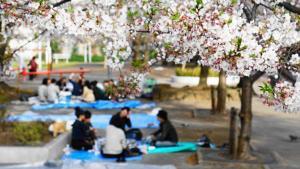 [花見]季節到来ー日本のサクラの花見に中国人が押し寄せるワケは花宴のルーツにあった!?