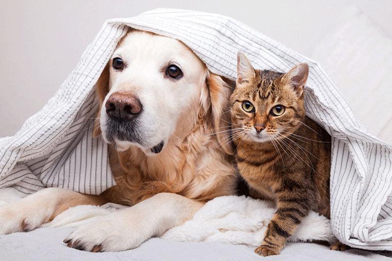 dog&cata